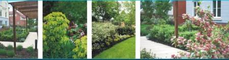 Landscape Planting Schemes
