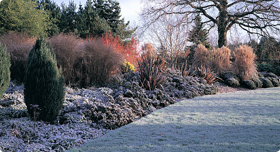 A Wintry Plant Post By Paul terra firma Landscape