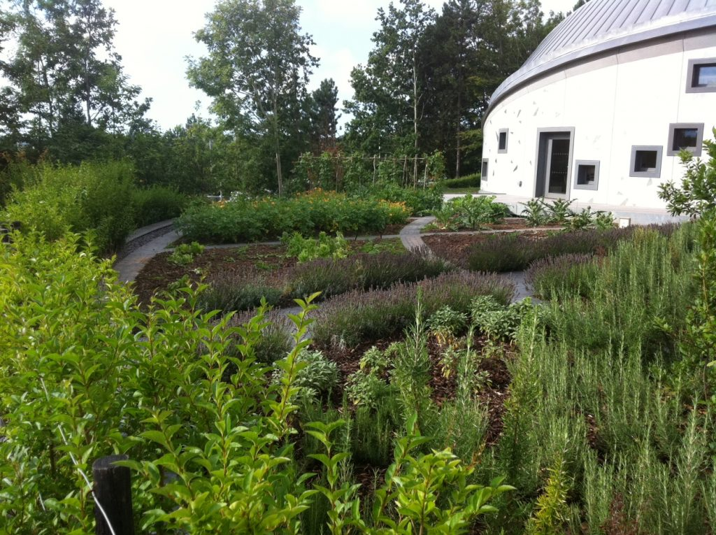 New vegetable garden at maggies cancer care centre for Terra firma landscape architecture