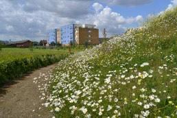 Gallions Reach Park, Landscape Architecture, Thamesmead