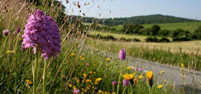 Re-shaping and revitalising landscapes for the future